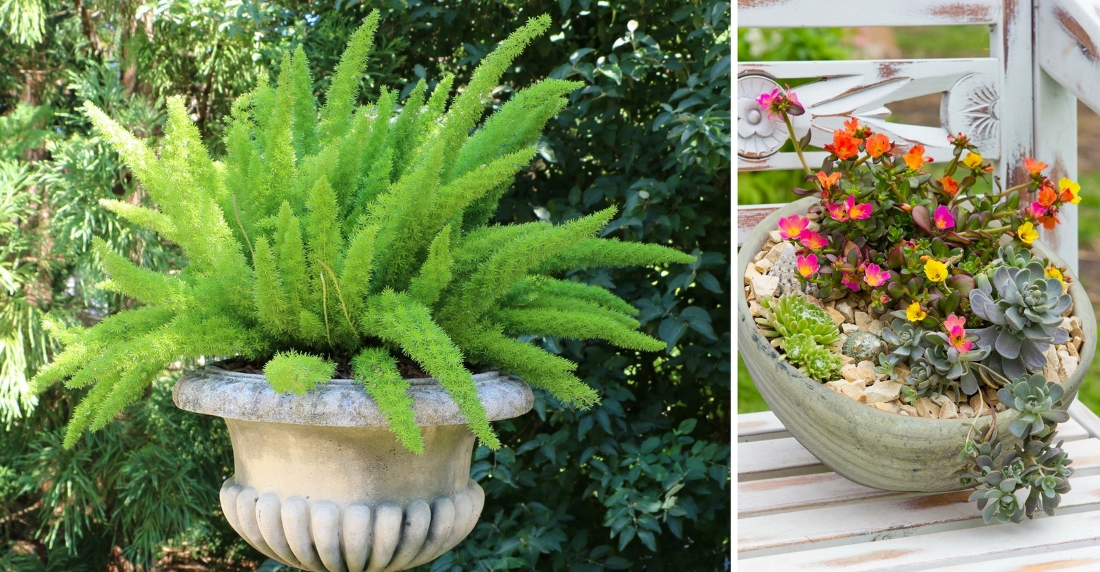 6 Heat-Loving Plant Combos for Containers