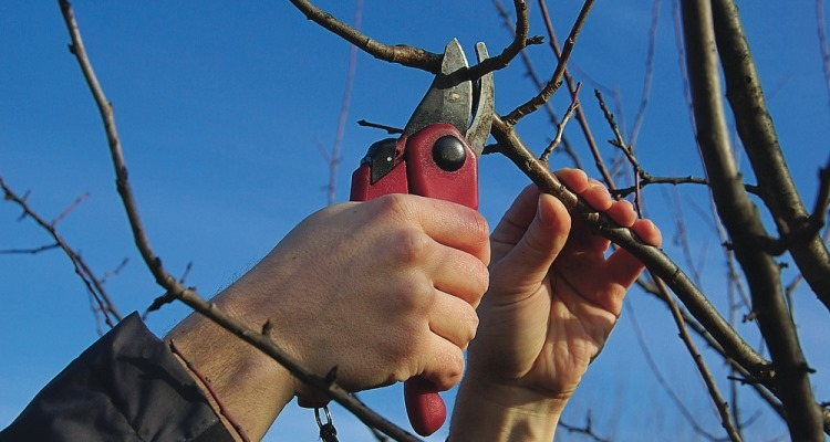 Prune trees and shrubs while they are dormant.