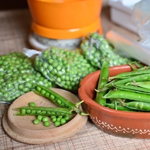 HOW TO FREEZE PEAS 1. Pick the peas from the garden. 2. Shell and wash the peas, discarding old or imperfect ones. 3. Blanch peas by placing them in a ...