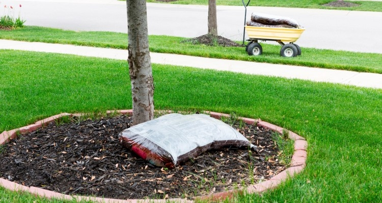 Mulching helps protect tree roots.