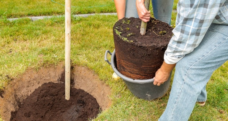 Fall is a great time to plant trees and shrubs.