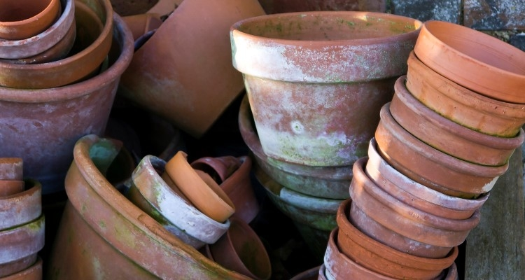 Clean and store clay pots for the winter.