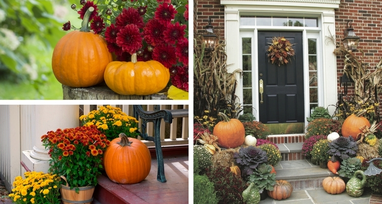 Autumn doorway displays with chrysanthemums, gourds, pumpkins, cornstalks