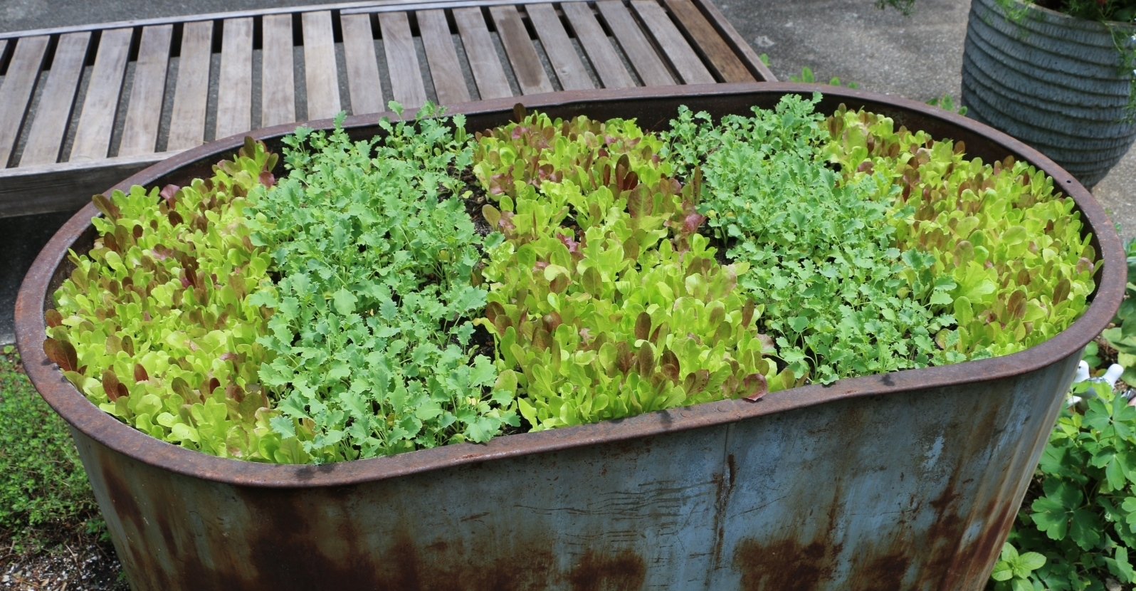 Leafy Greens – Fall-friendly Crops Extend the Harvest Season