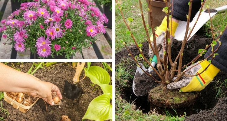Autumn is perfect for planting flower bulbs, trees, shrubs and perennial plants.