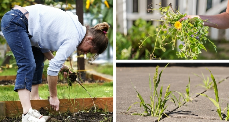 Pulling weeds in the fall helps keep the garden tidy for the spring.