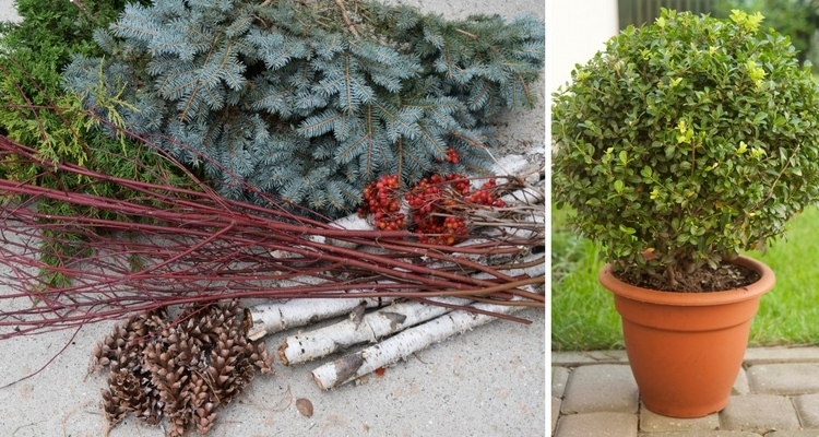 Features - Living Evergreen Plant or Branches & Boughs