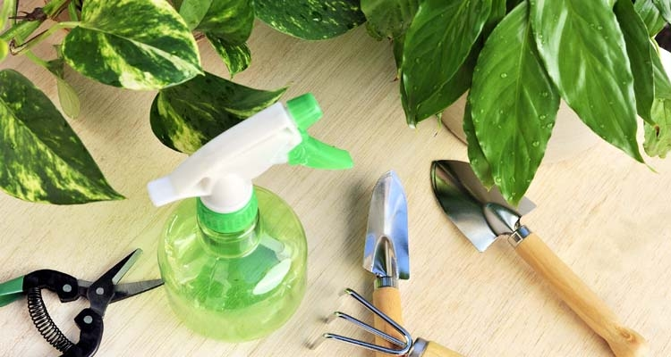 Indoor Gardening Tools and Houseplants