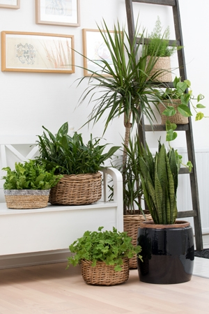Grouping, Decorating with Houseplants Indoors