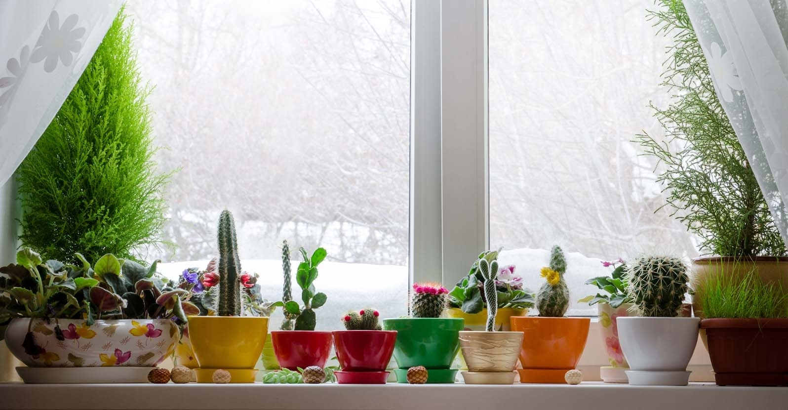 Winter Care Tips for Houseplants