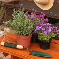 Flowering Plants and Trowel on Bench