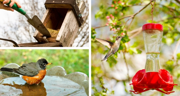 Garden Upkeep - Cleaning Birdhouse, Refilling Feeders, Filling Birdbath