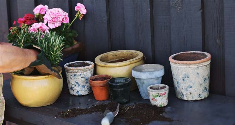 Planting Flowers And Herbs At Potting Bench