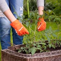 Using Gardening Gloves