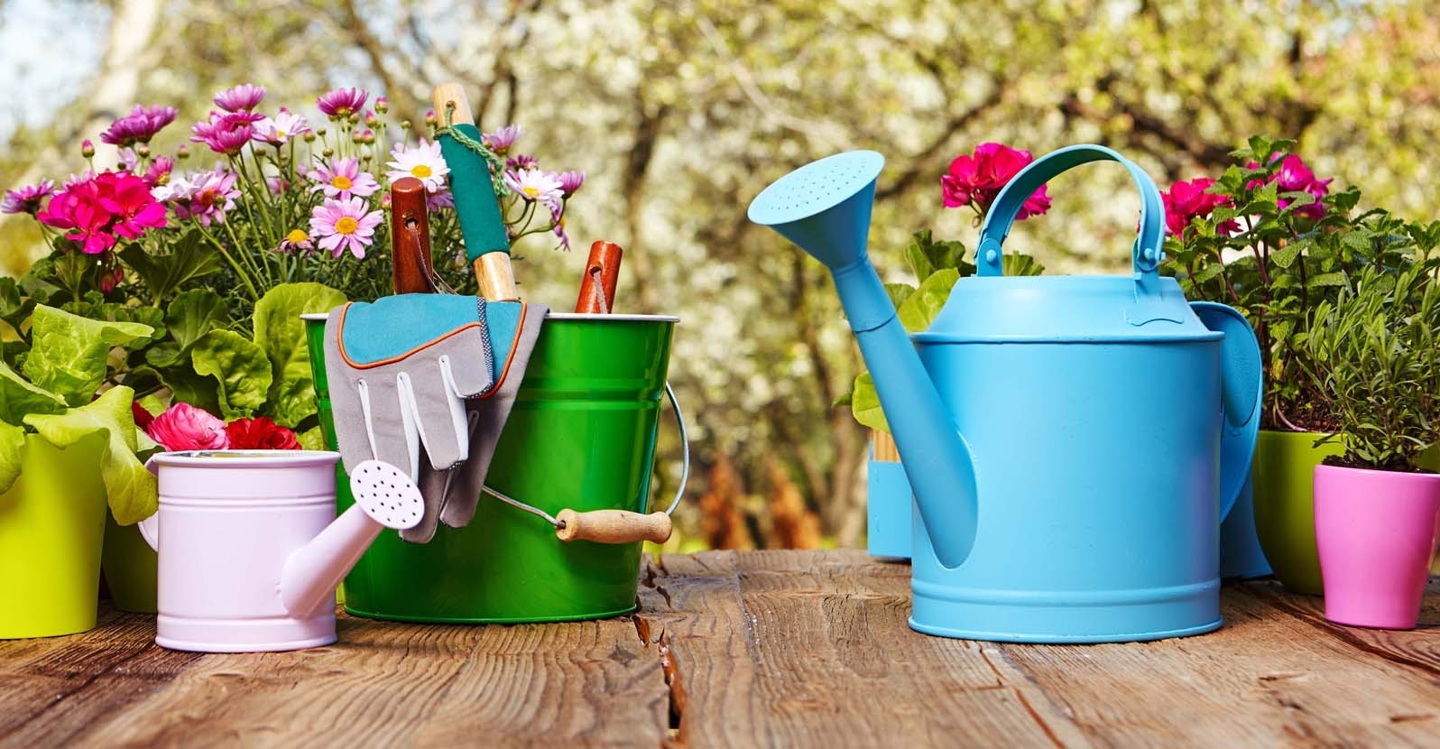 The Basic Gardening Tools Everyone Needs