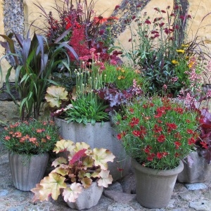 Perennial plants in patio pots