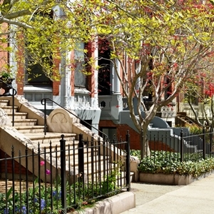 Trees create shade that helps cool urban landscapes in the summer.