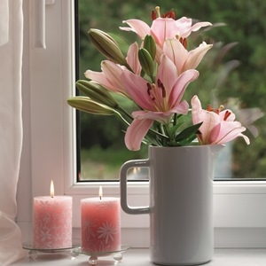 Lily cut flowers