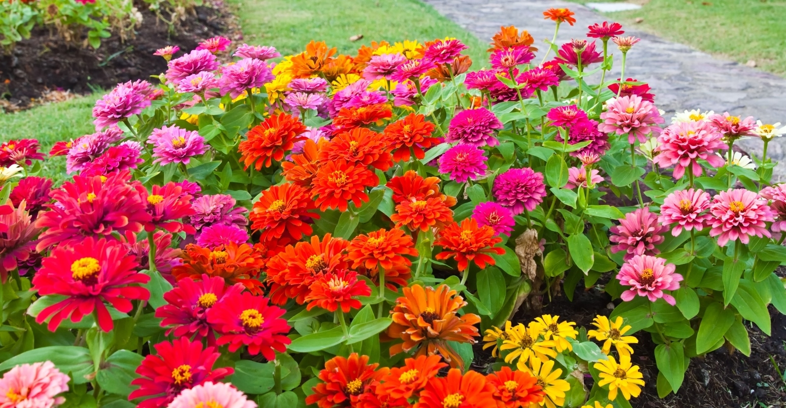 Top 10 Easy to Grow Annuals