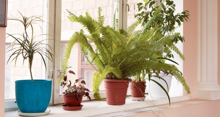 Tips for Choosing the Right Pot for Your Plant | My Garden Life