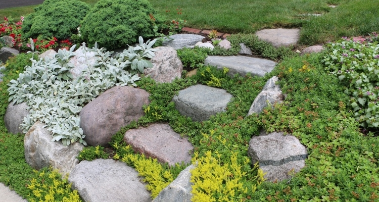 Groundcovers hold soil in place near steps going up a slope.