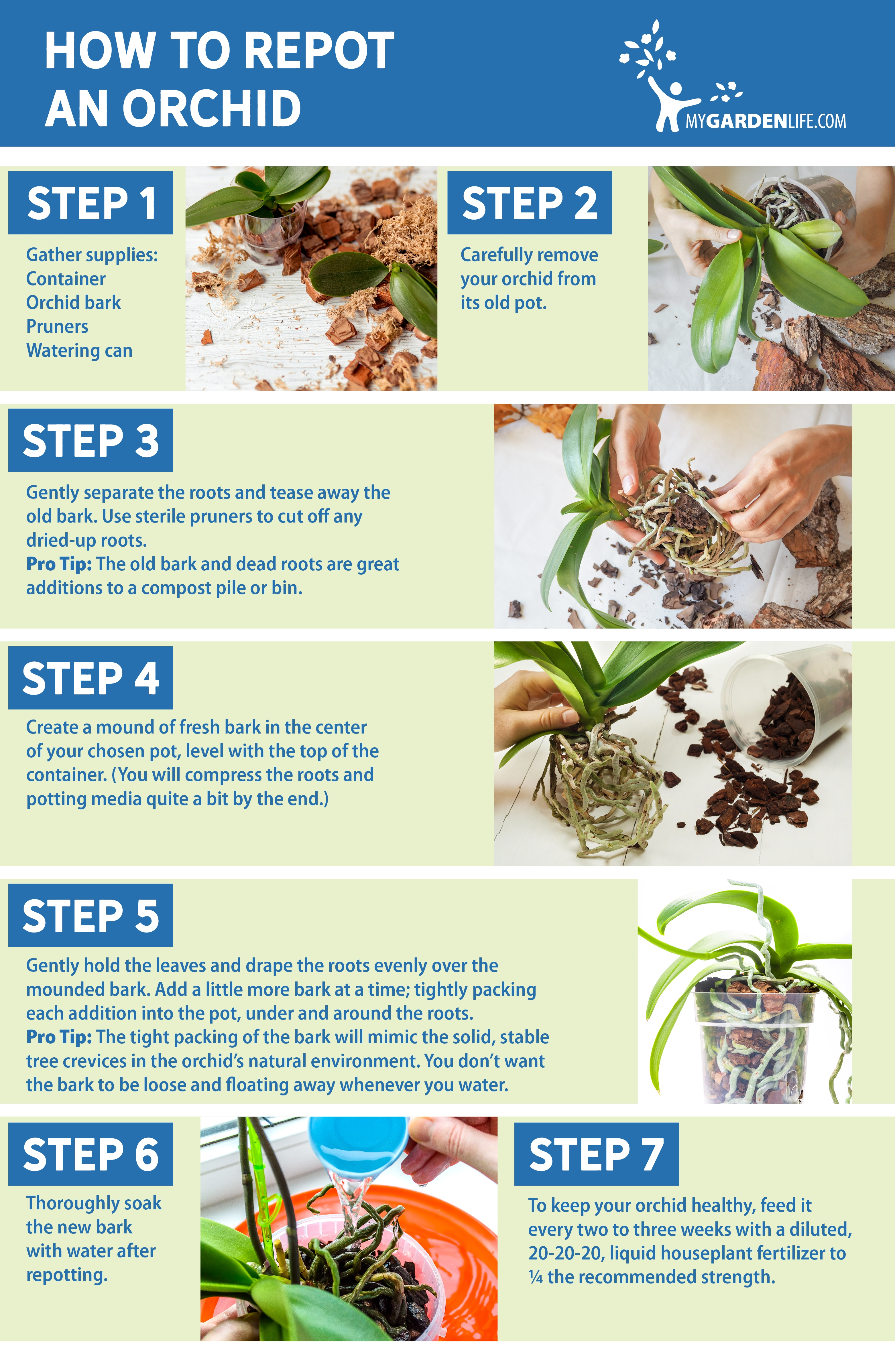 My Garden Life DIY How to Repot an Orchid_Infographic