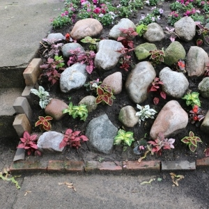 Rocks and plants prevent erosion of a small slope.