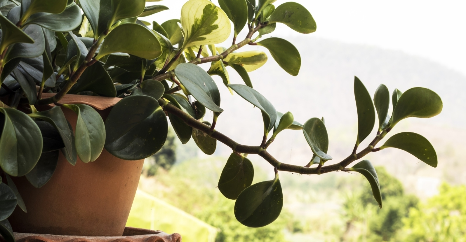 Freshen Up Your Houseplants