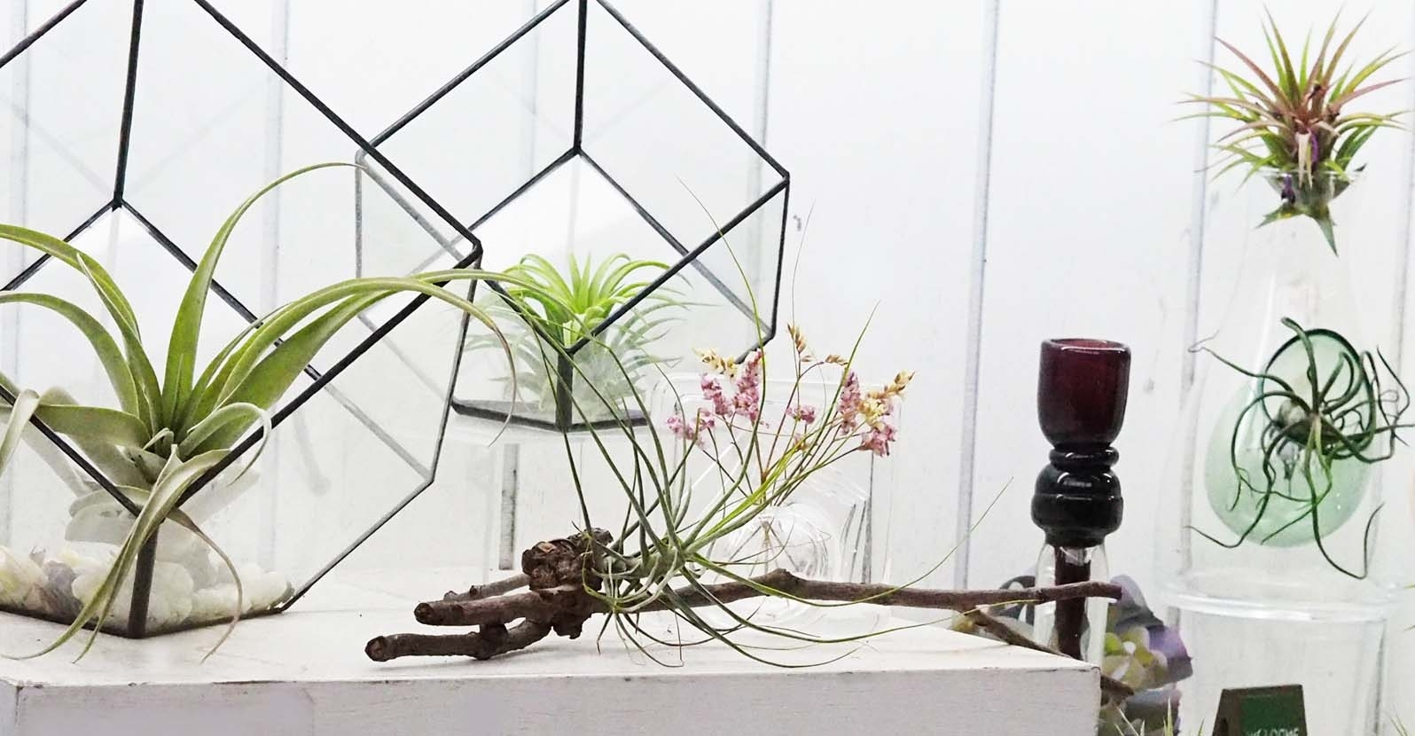 Diy Magnetic Plant Holder For Small Spaces My Garden Life
