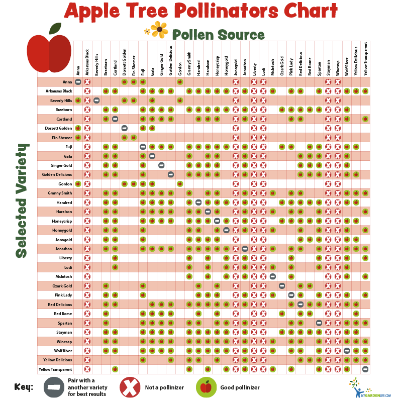 Pollination charts for fruit bearing trees and shrubs my garden life