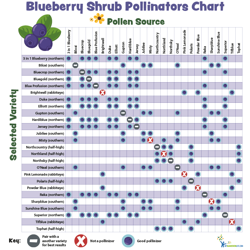 Blueberry Shrub Pollinators Chart