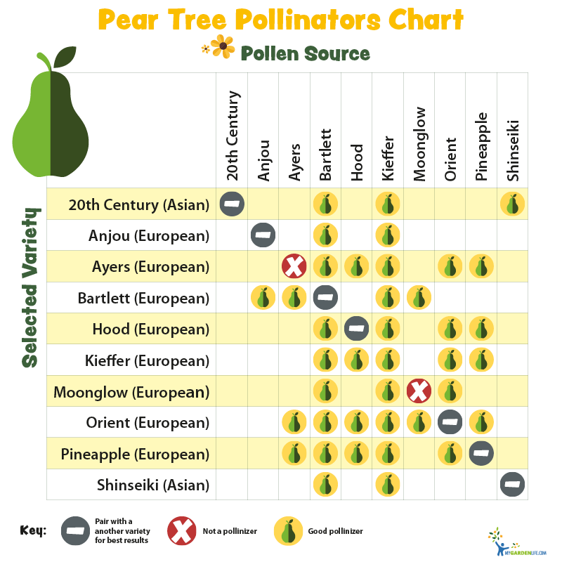 Pear Tree Pollinators Chart