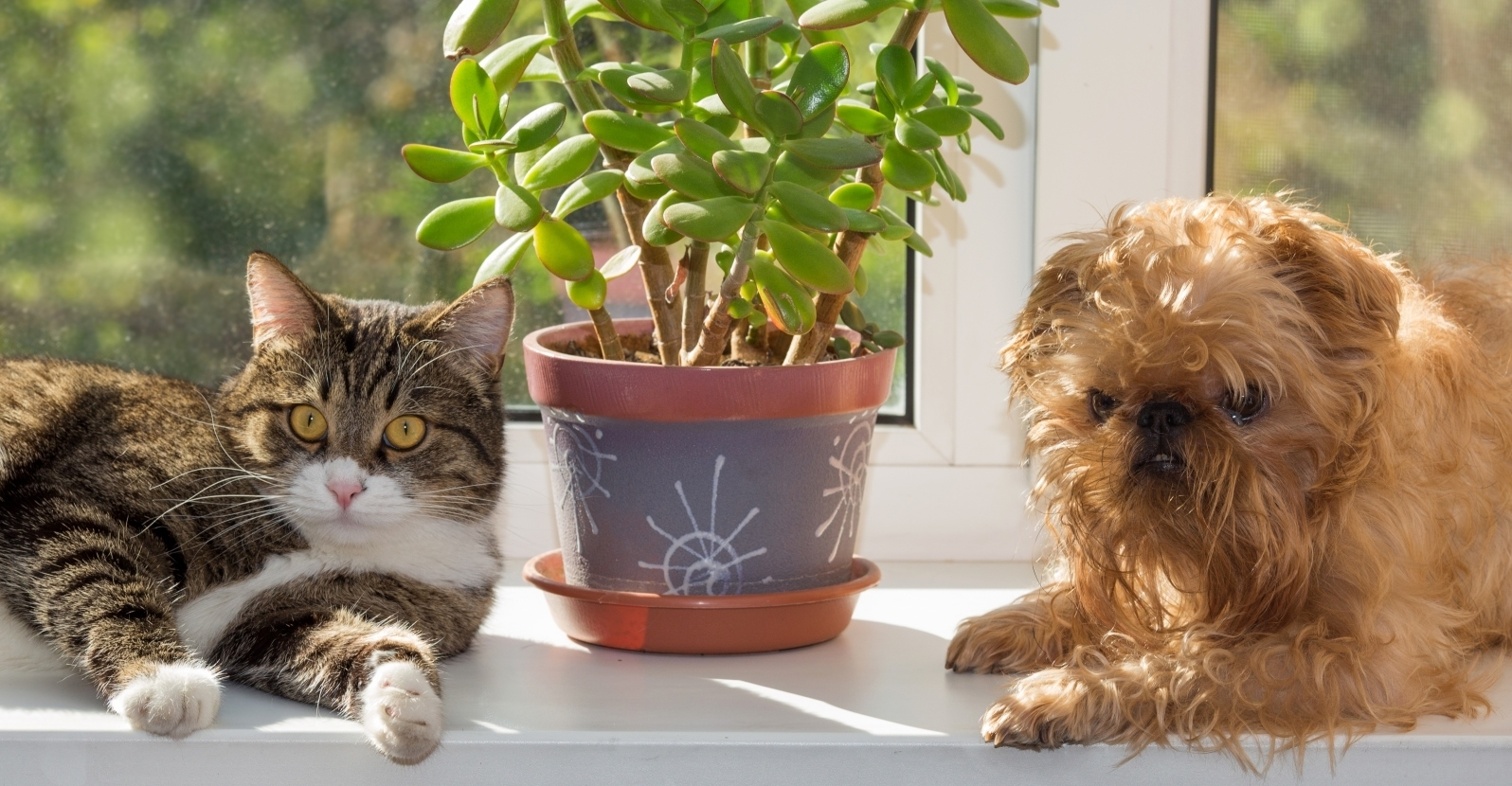 Pet Friendly Houseplants