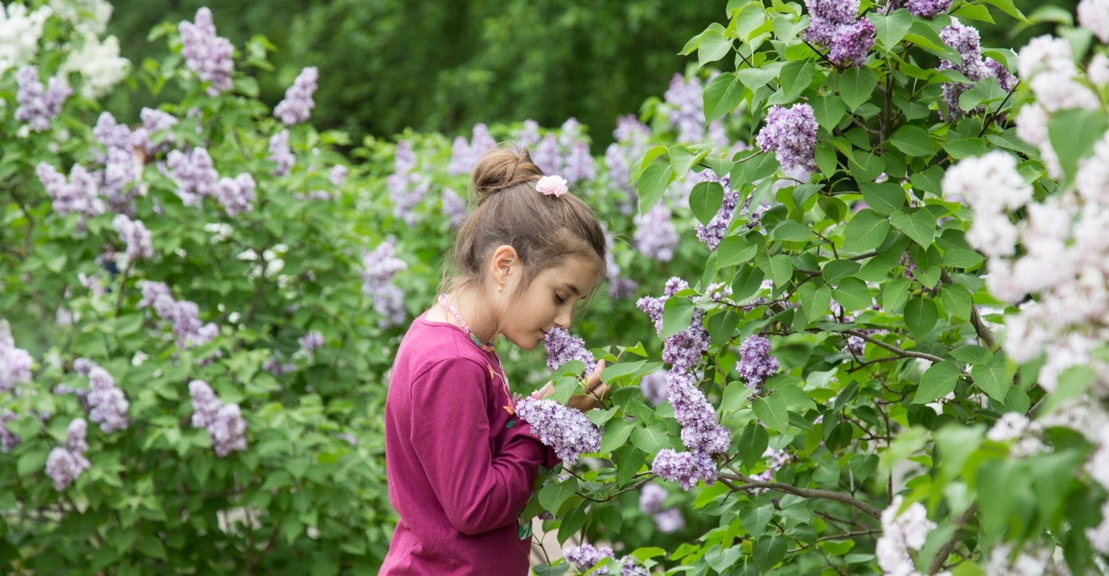 10 Shrubs That Smell As Good As They Look My Garden Life