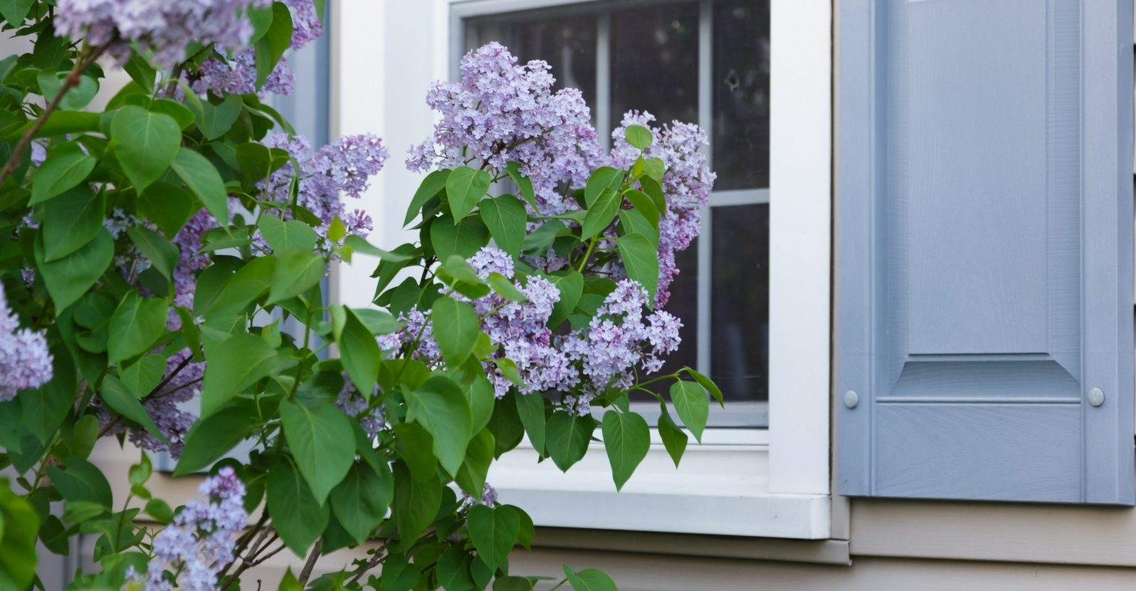 Toughen Up Your Landscape: 10 Shrubs That Can Handle Harsh Conditions