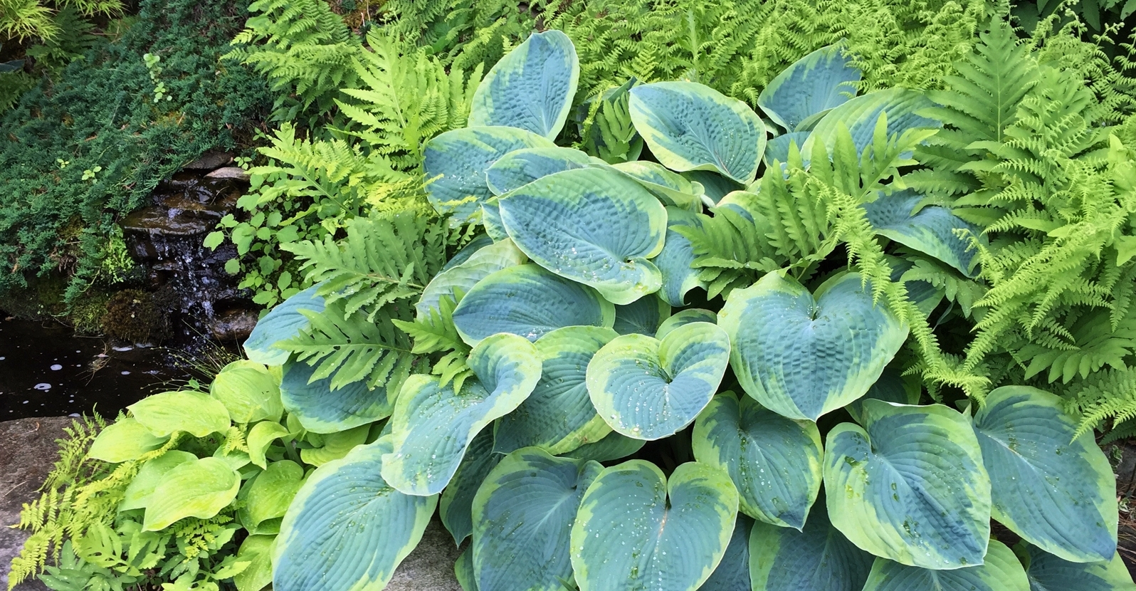 10 Perennial Shade Plants With Fabulous Foliage My Garden Life