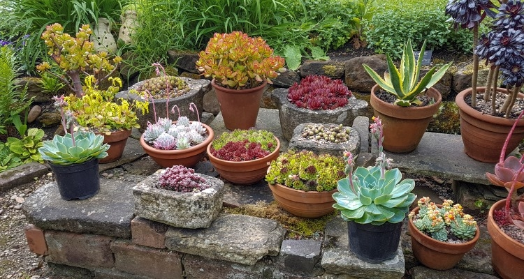How To Grow Succulents Outdoors My Garden Life