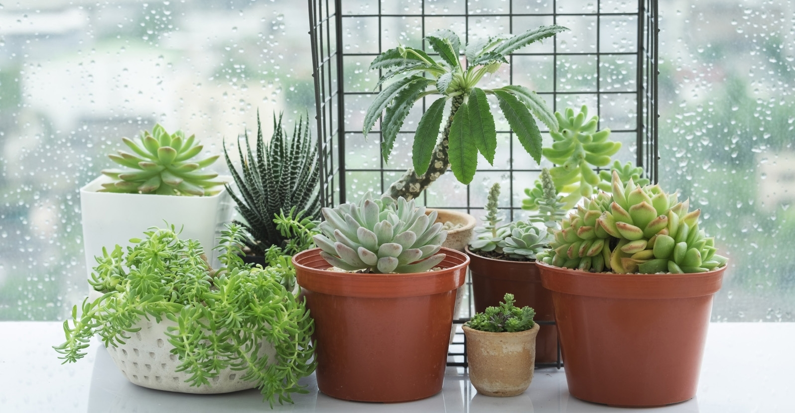 How To Grow Succulents Indoors My Garden Life
