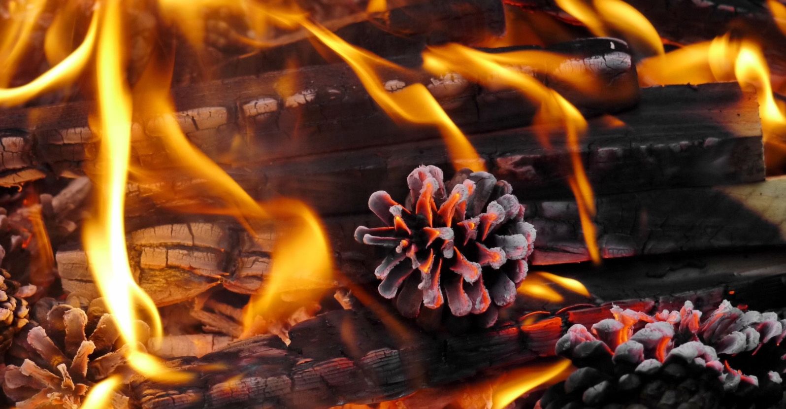 How To Make Pine Cone Fire Starters My Garden Life