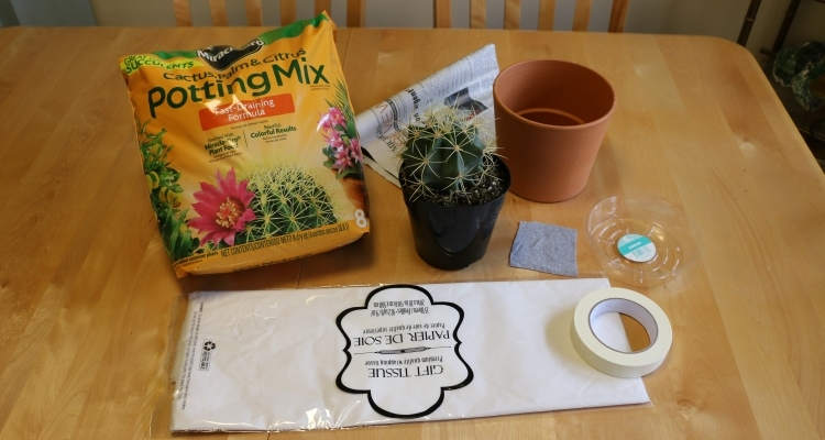 supplies for potting a cactus