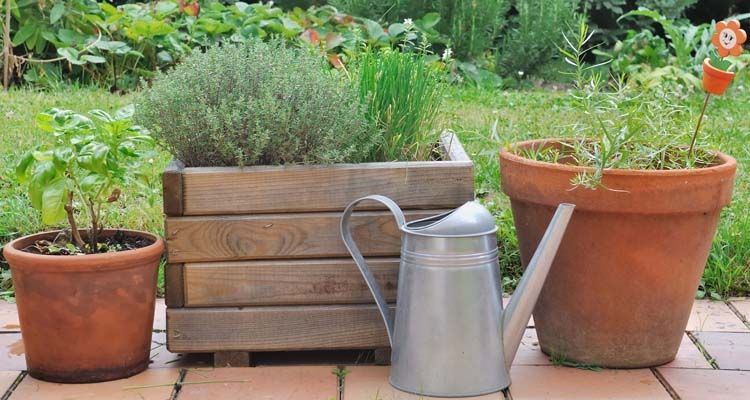 Herbs in Terra Cotta Pots and a Wooden Planter with Metal Watering Can