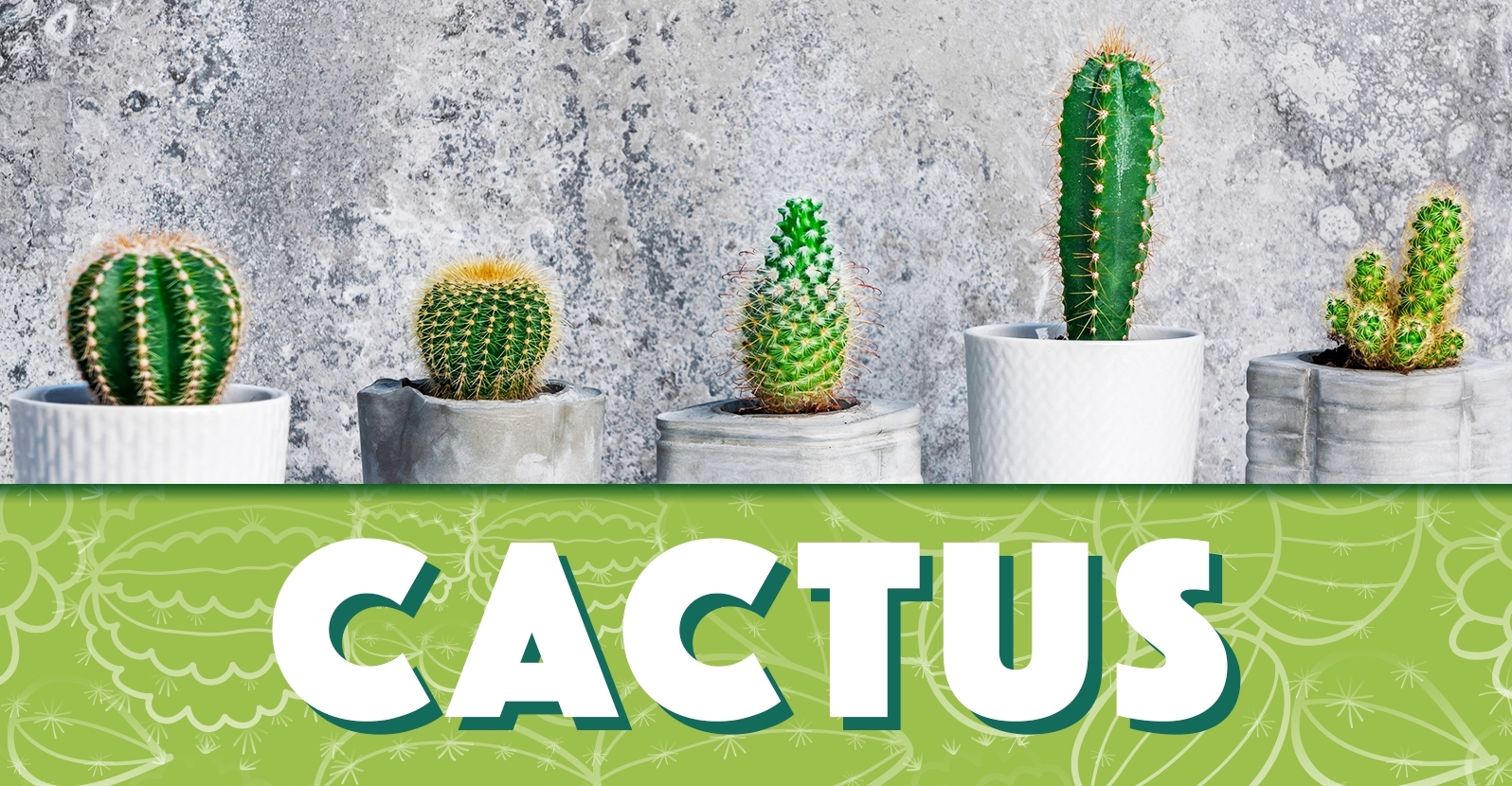 All About Growing Cactus