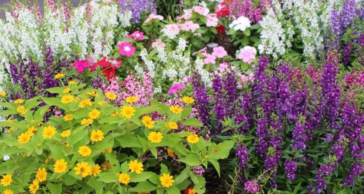 A beautiful garden of flowering plants that can withstand heat and drought