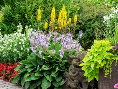 Know Your Plants - Annual vs. Perennial, beautiful border with annual and perennial flowers