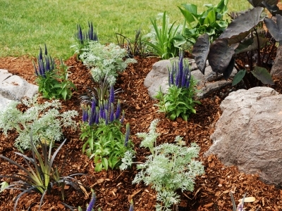 Time Saving Tip: Mulch, photo of newly mulched flowers