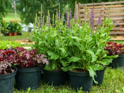 What to Do When You Can't Plant Right Away, photo of plants in nursery pots