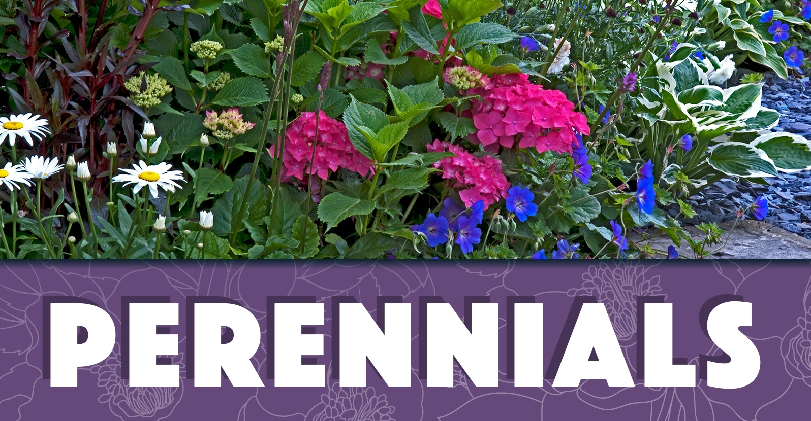 All About Growing Perennial Plants