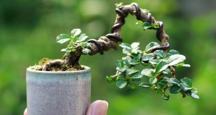 Spring And Summer Bonsai Tree Care My Garden Life