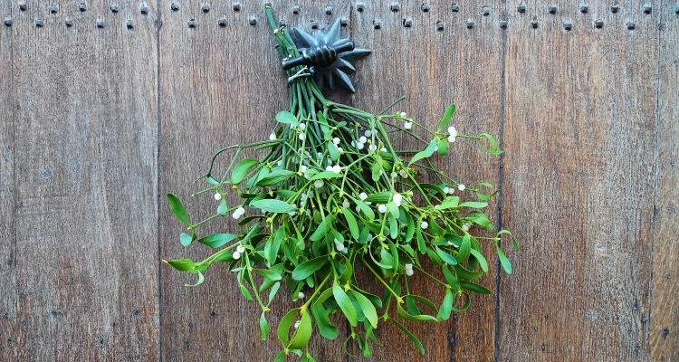 bundle of mistletoe hanging from a wall