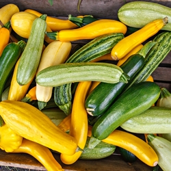 Pile of Yellow and Green Summer squash